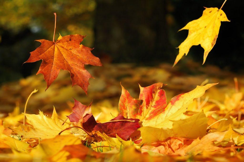 Falling leaves dreamstime 11646793 2